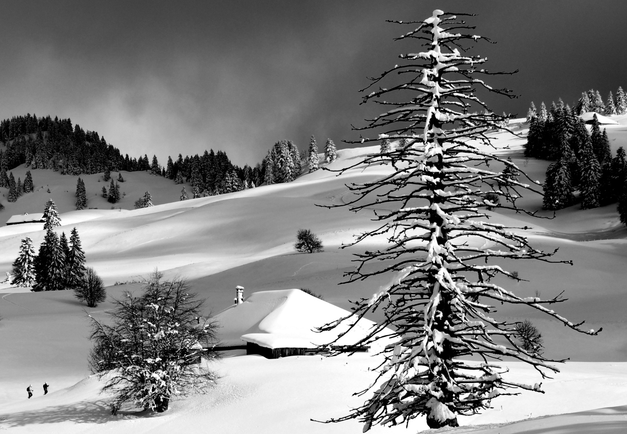 Snowscape in the Juramountains