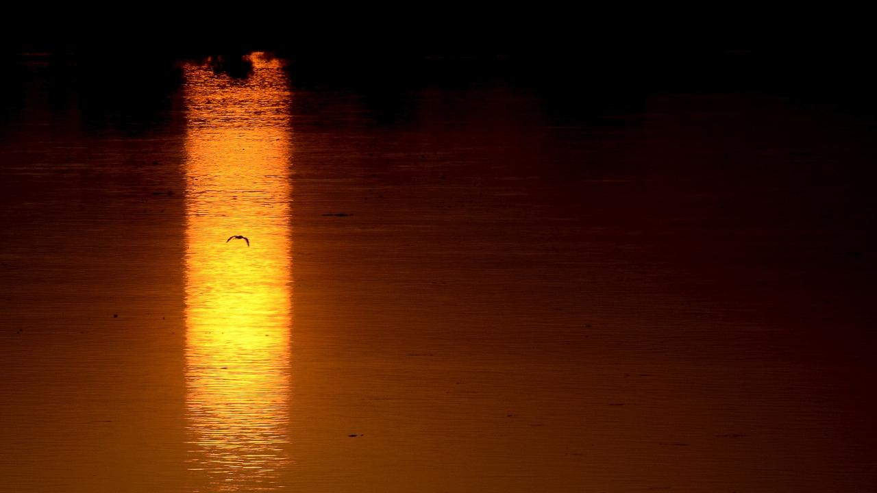 Chari river, Chad-Cameroon
