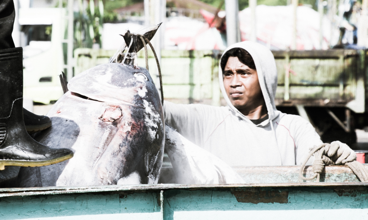 Landing frozen tuna in Indonesia